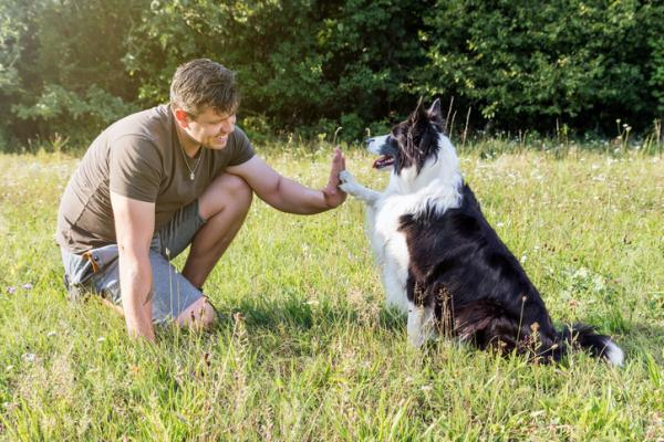 how to train a border collie